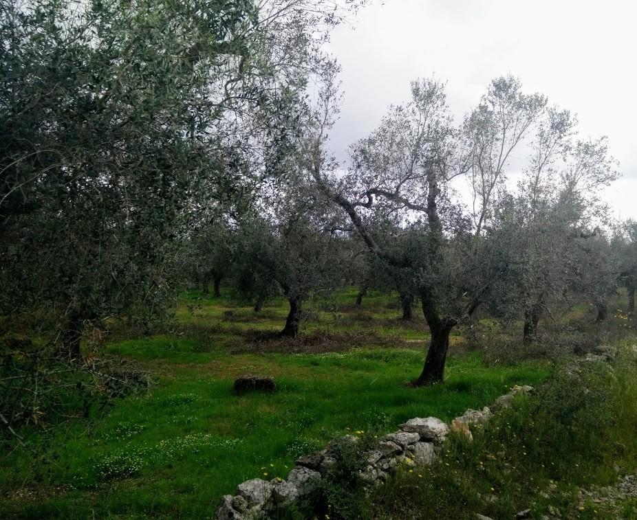 Campagna di Zollino