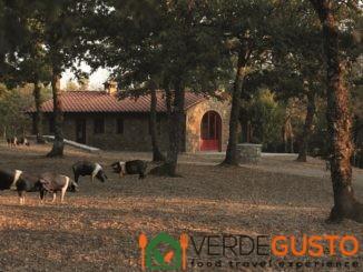 Tour Cipressi in Chianti - Fattoria di Cinta Senese a Barbischio